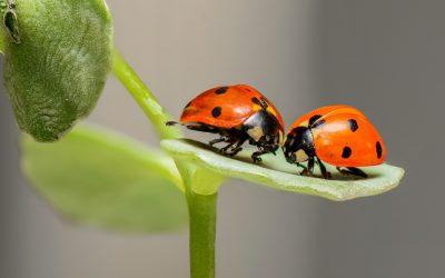 Les Maisons à Insectes