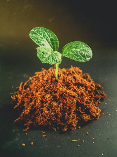 Jardinage et Permaculture